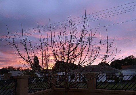 Pinky-purple sky from home that evening.