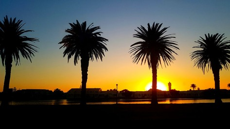 Palm trees at Woodbridge Island at sunset, as seen on our way home tht evening, always make for a pretty photo.