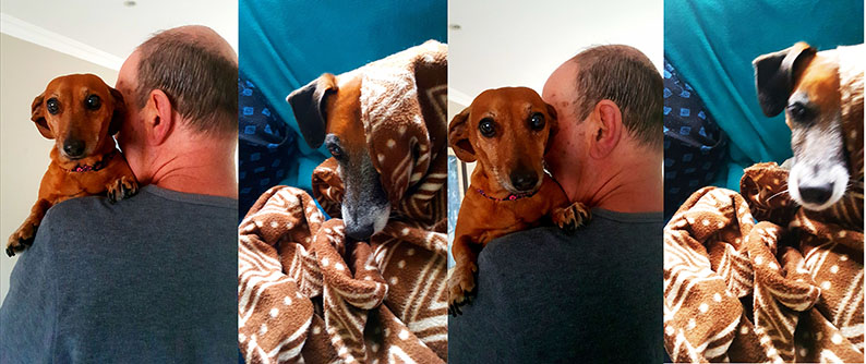The doggies spent much of the week wrapped in blankets and getting snuggles, as seen here.
