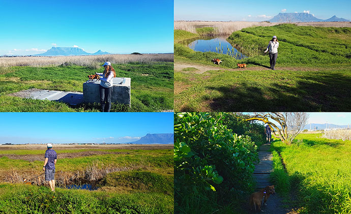 """Scenes from our walkies around Flamingo Vlei last Sunday. Love the one bottom-right of Bassie saying 'Come Mom, it's this way."""""""